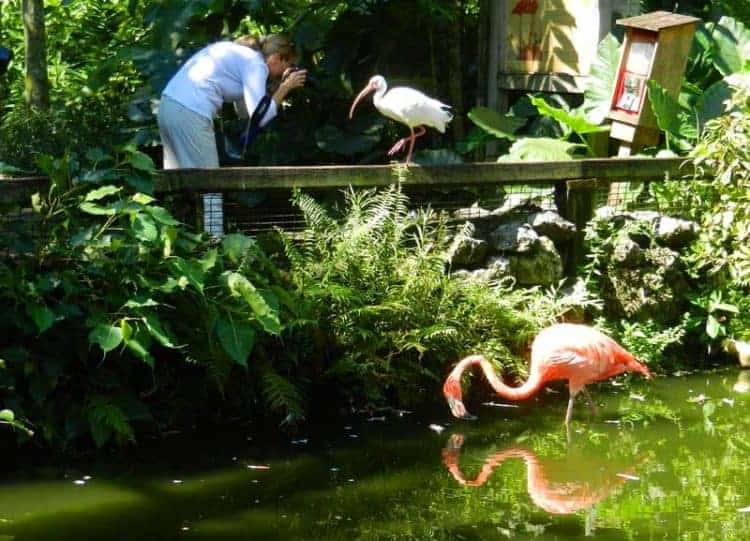 A flamingo at Flamingo Gardens. (Photo: Bonnie Gross)