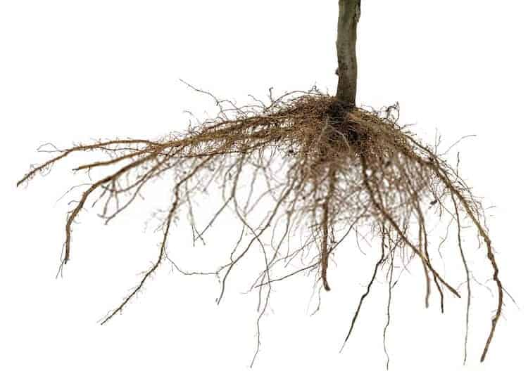 What Happens If You Cut The Roots Of a Plant