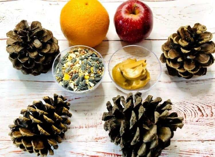 fruit, nuts and pine cones on a wood table