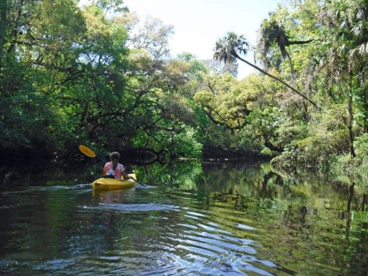 Kathy paddles in Hillsborough River State Park