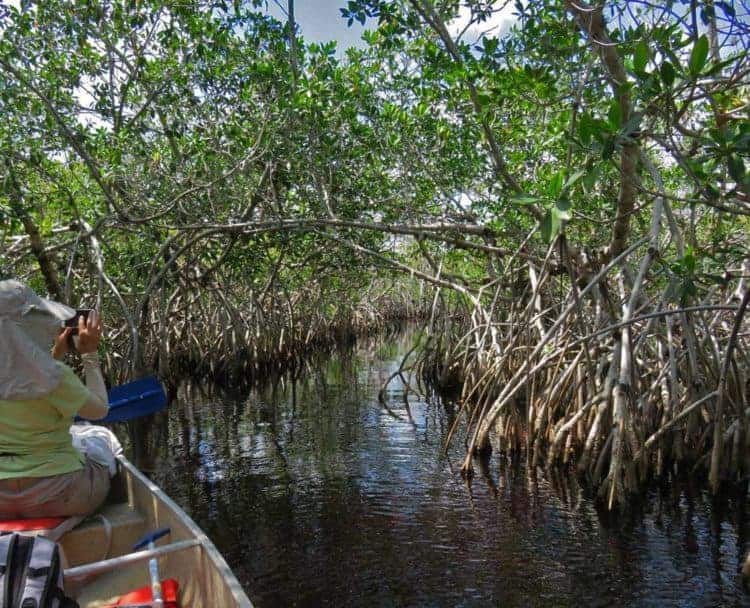 Mangrove tunnel on Hell's Bay Kayak Trail in Everglades National Park. (Photo: Bonnie Gross)
