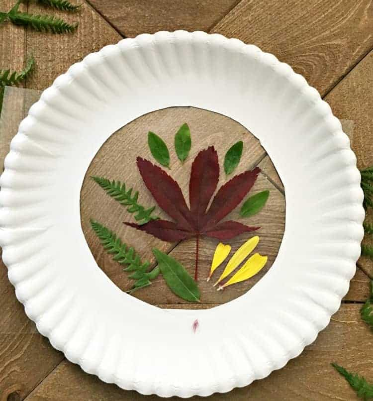 paper plate with hole in middle and leaves arranged in the hole