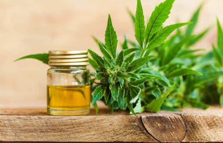 hemp cbd oil shutterstock