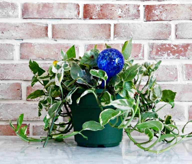 potted plant with water globe in front of brick wall.