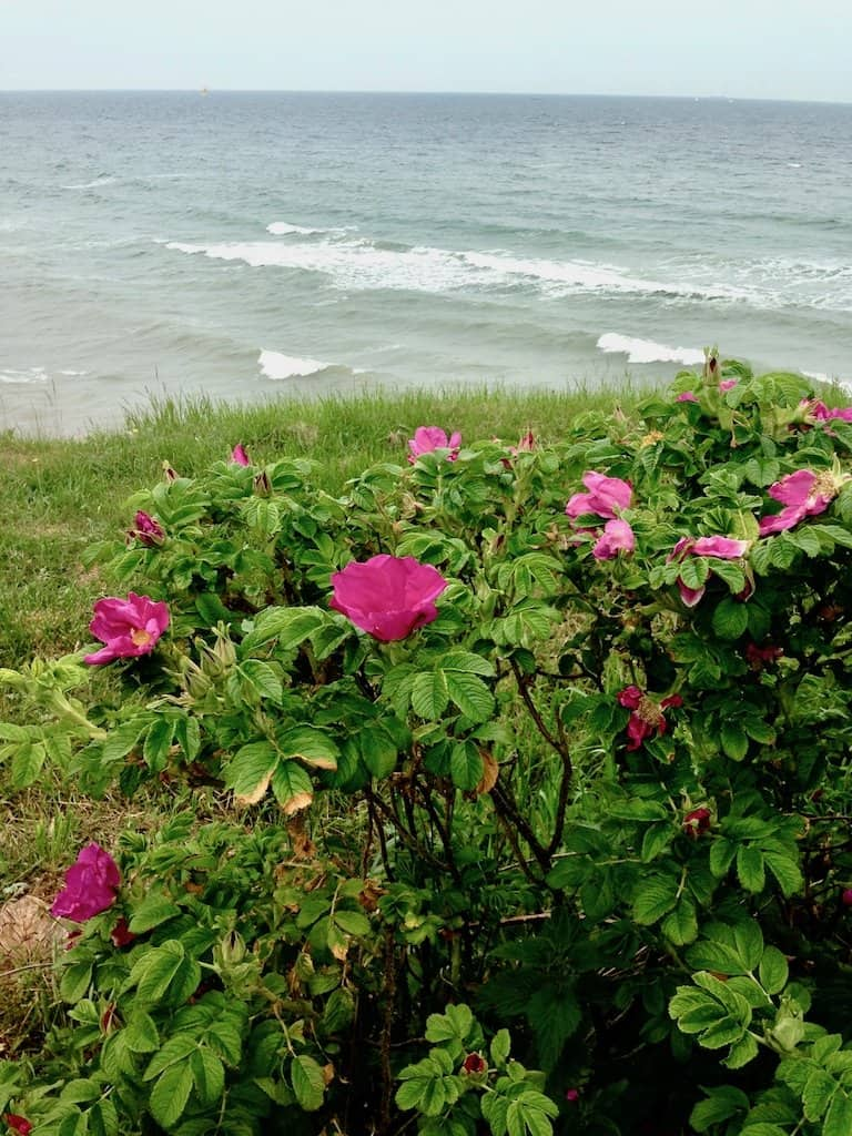 Tipps für Rostock Ostseestrand