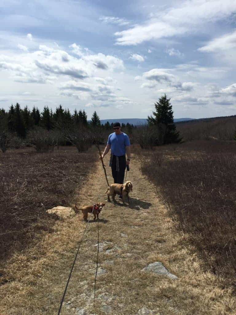 dolly sods dog hike 2