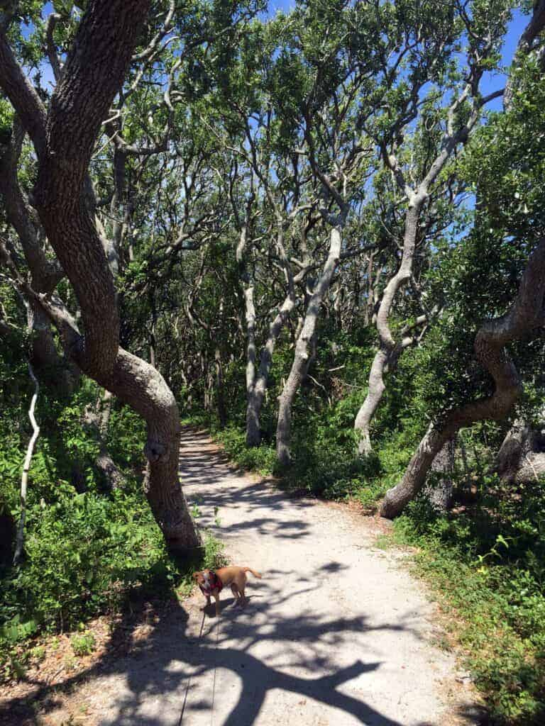 Fort Macon State Park maritime forest