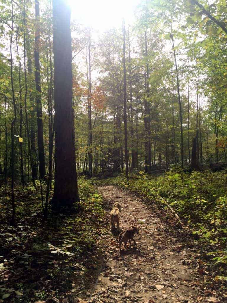 dogs on ferncliff trail in ohiopyle state park