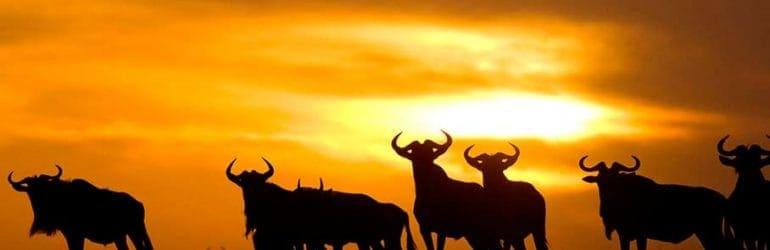 Ubuntu Camp, Serengeti