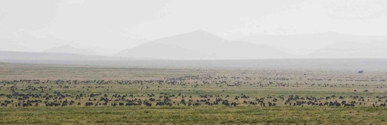 Ndutu Kati Kati Tented Camp Migration