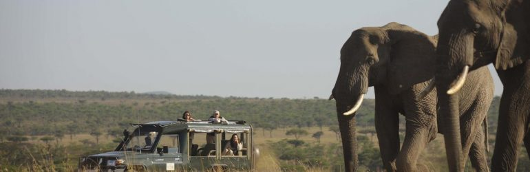 Elephants On Game Drive