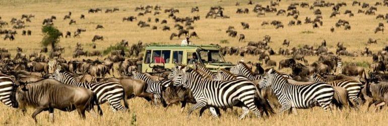 Serengeti Migration Tanzania