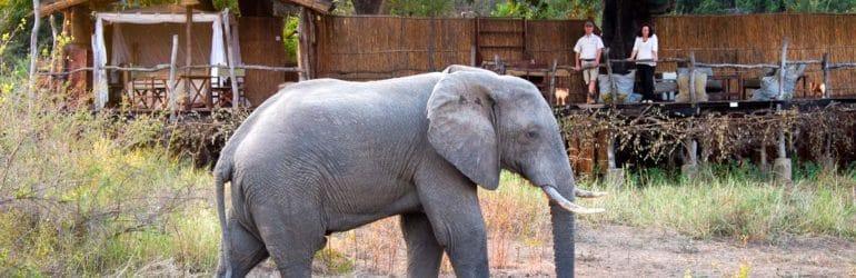Jackalberry Treehouse Elephants
