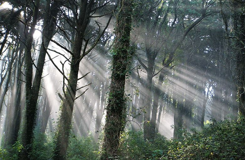 mystic forest of sintra