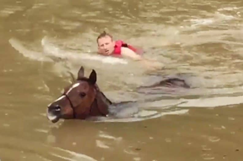 Horse hero swims next to a horse he is bringing to shore during Houston's flooding.