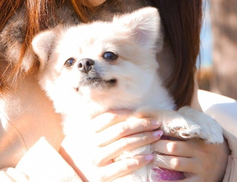 犬の英語−Pomeranianの英語