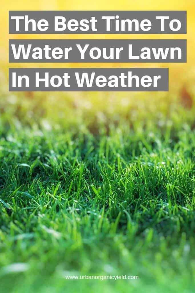 When Is The Best Time To Water Your Lawn In Hot Weather To Keep Grass Green (1)
