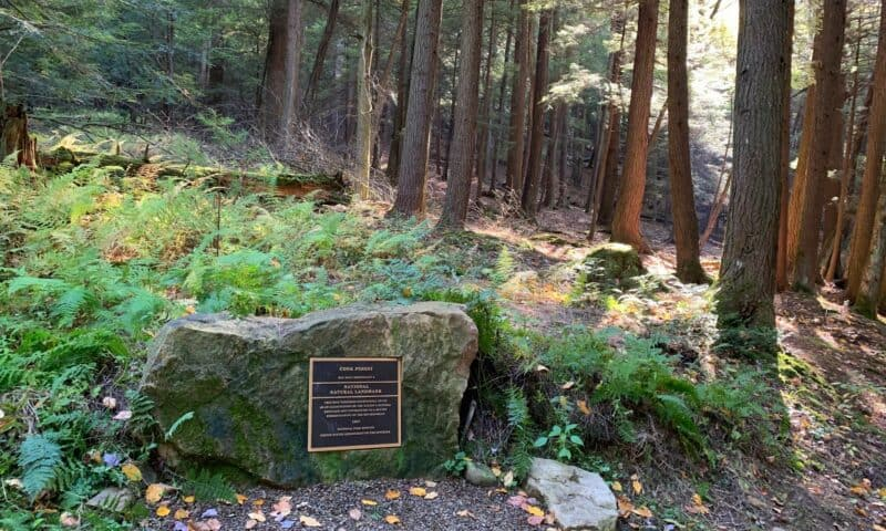 cook forest trailhead
