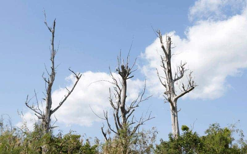 Symptoms of a Dying Tree