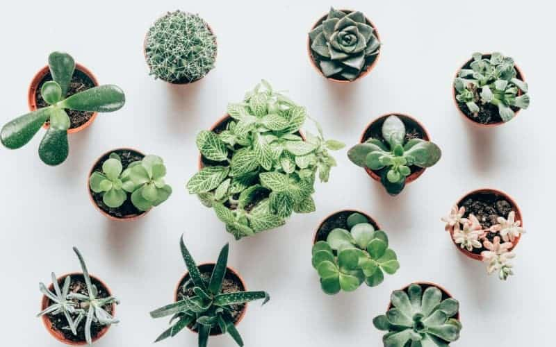 How Many Varieties Of Succulents Are There