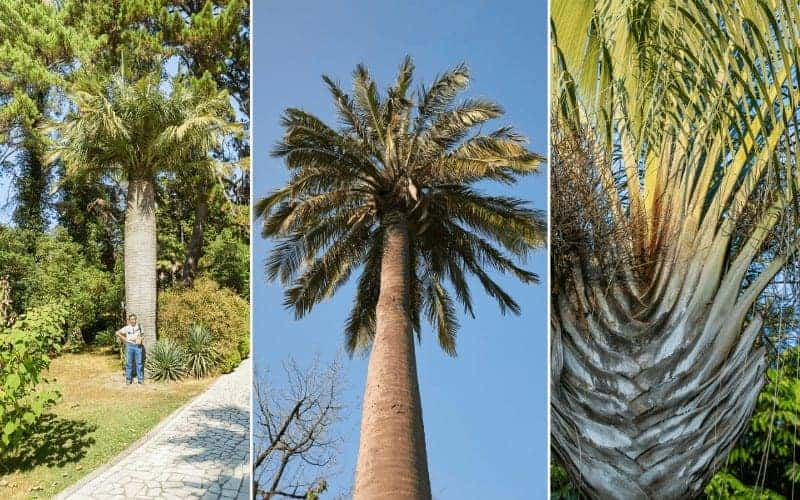Types Of Palm Plants