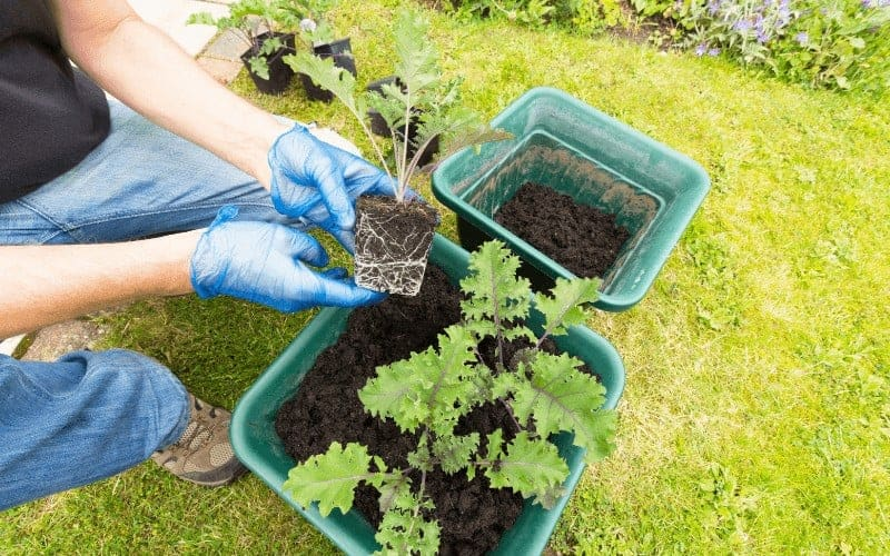 Vegetables That Can Grow In 5 Gallon Buckets