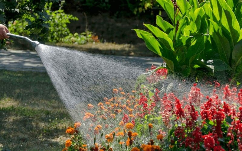 How To Make Tap Water Safe For Plants