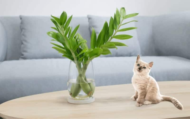 Is ZZ Plant Poisonous to Cats