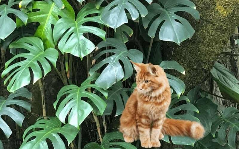 Will Philodendron Kill a Cat