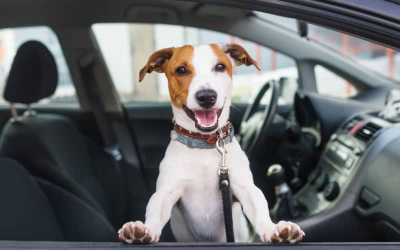 Come (non) trasportare un cane in auto