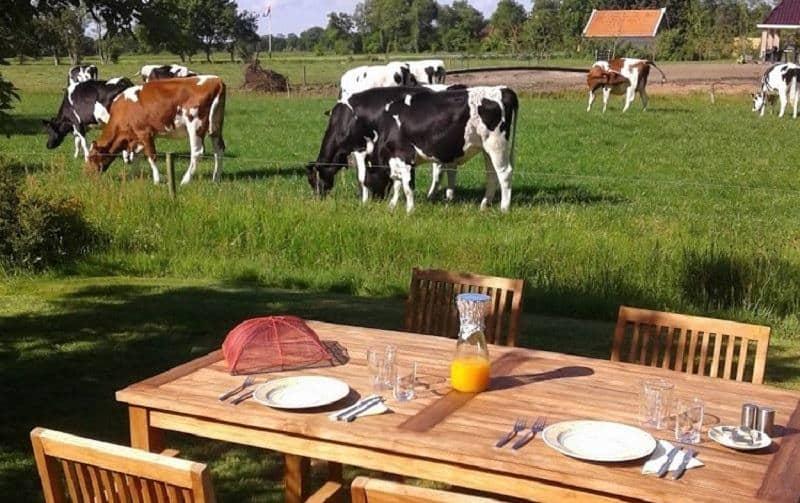 Tuin Met Ontbijttafel En Uitzicht Over Landerijen