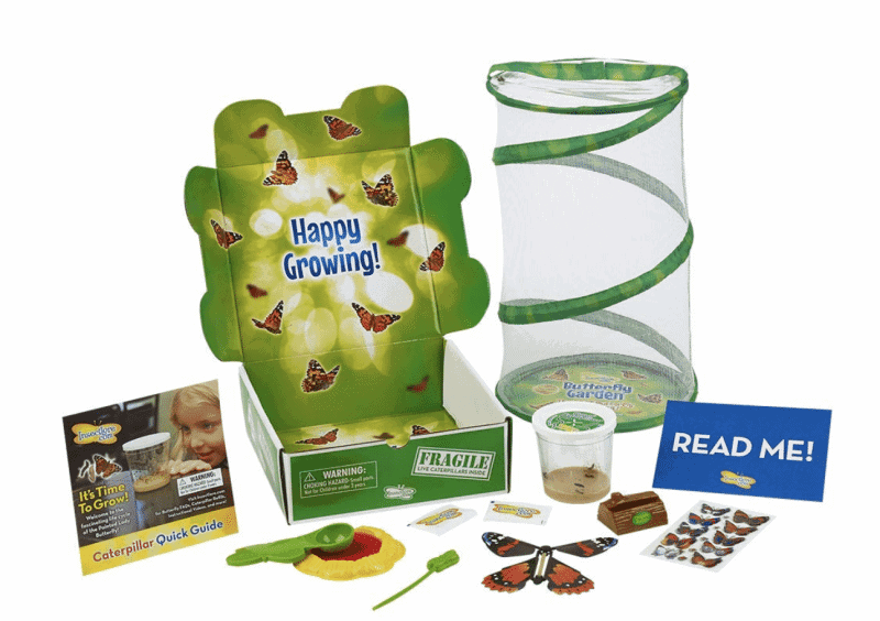 Butterfly Garden Hatching Kit