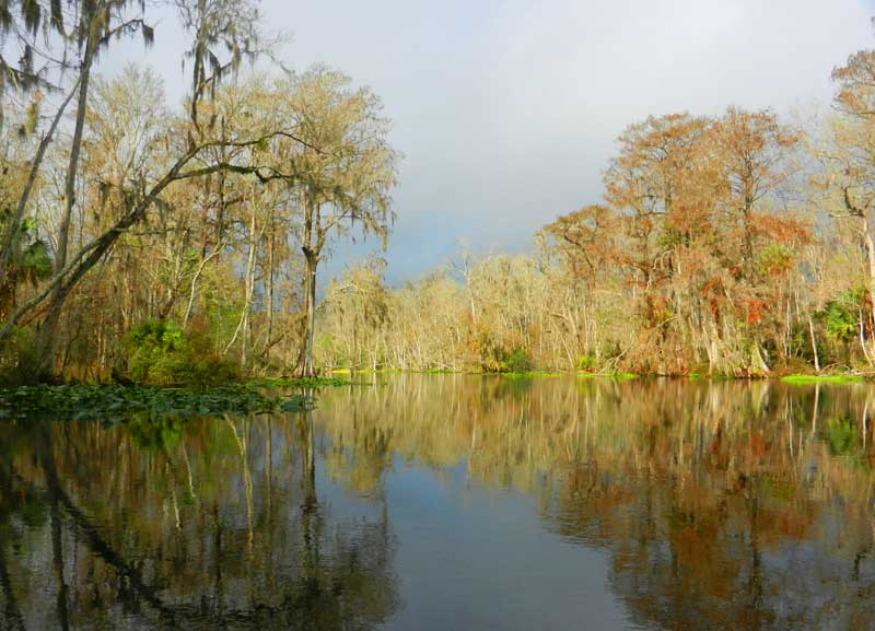 The Silver River at Silver Springs State Park. (Photo: Bonnie Gross)