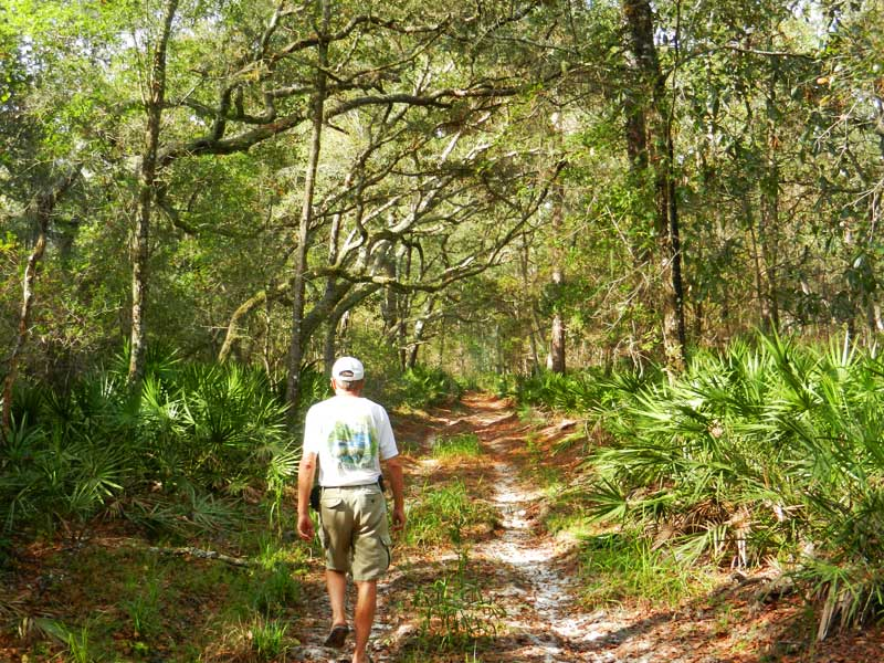 We pulled our canoe onto land on a small off-shoot of the Ocklawaha and walked a ways down this lovely lane through the forest.