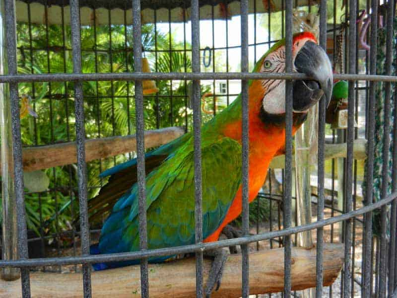 Things to do on Sanibel Island: An aviary is a free hidden treat at a campground on Sanibel, Florida.