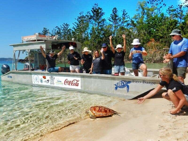 Eco Barge Clean Seas releasing a sea turtle in the Whitsundays from a beach with their private marine debris barge with turtle being released