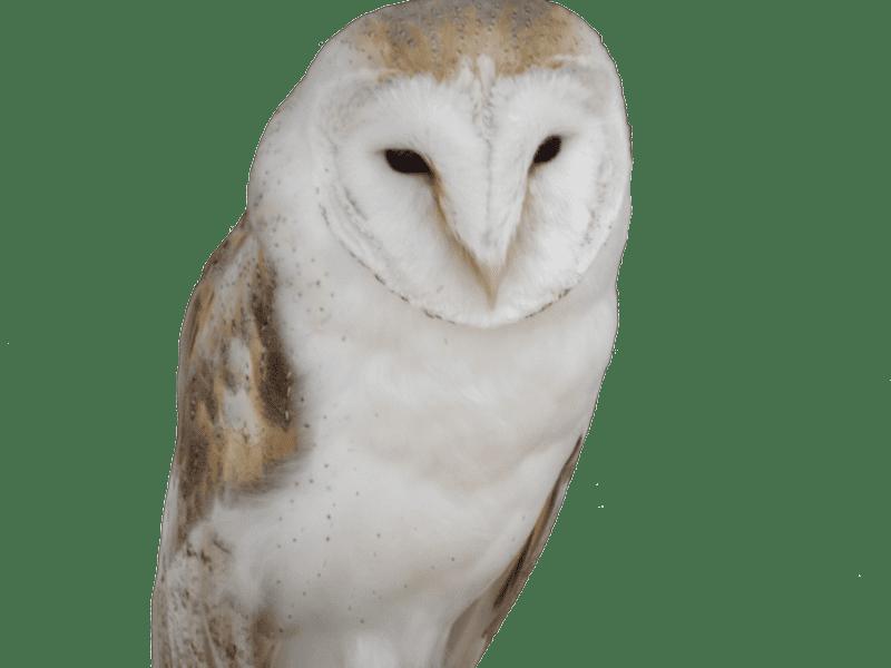 Owl trademark attorney Florida