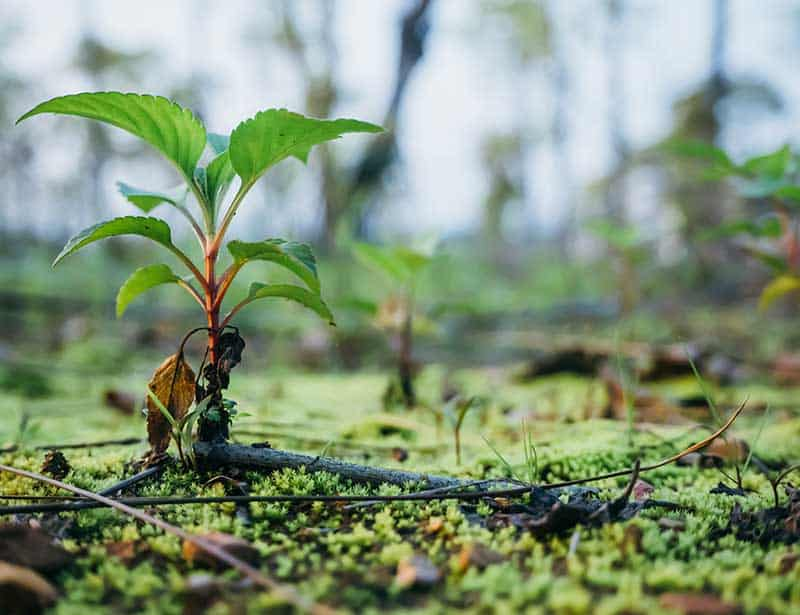 Plant trees to offset carbon