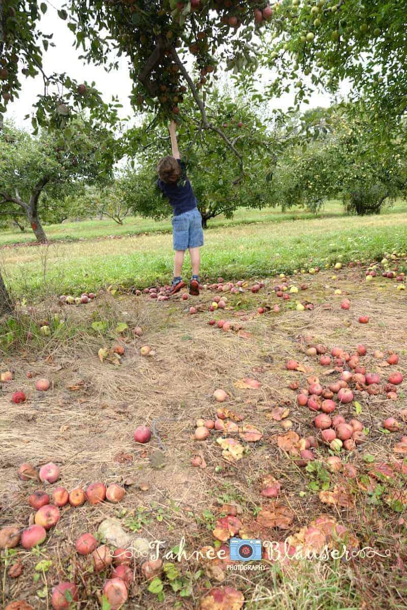 joshua-picking-apples