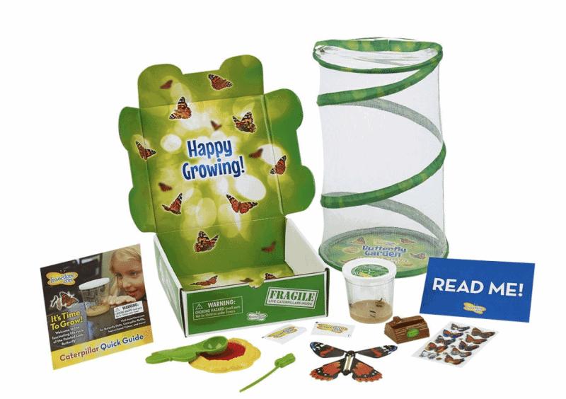 Butterfly Garden Hatching Kit