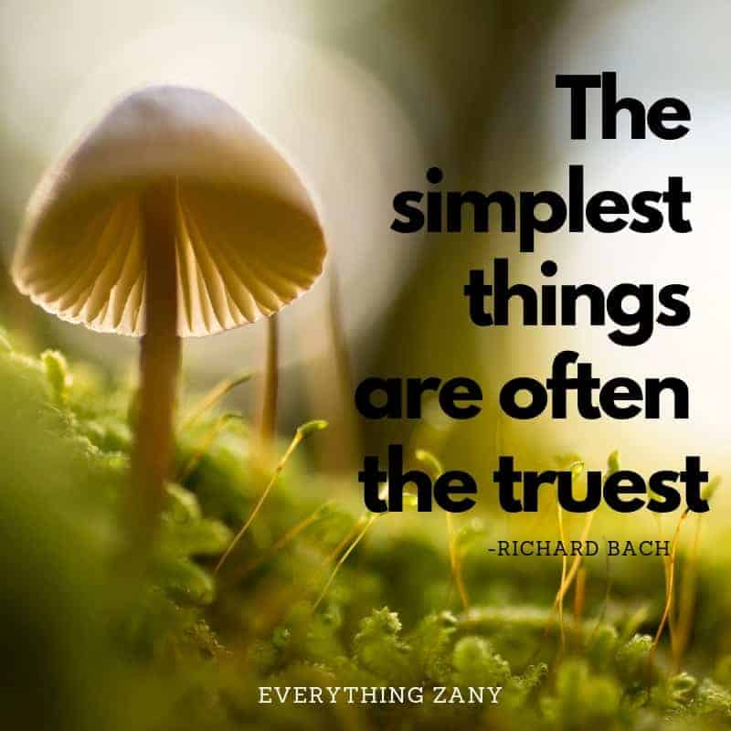 the simplest things are often the truest