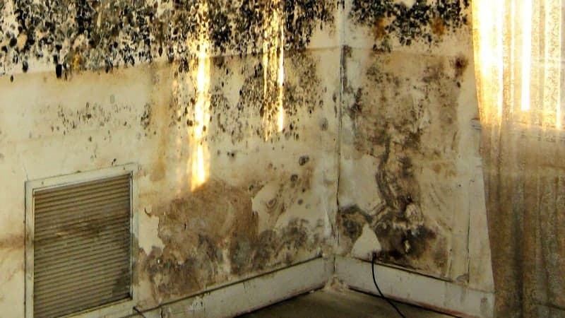 Black mold and mildew climbing up walls in the corner of a house