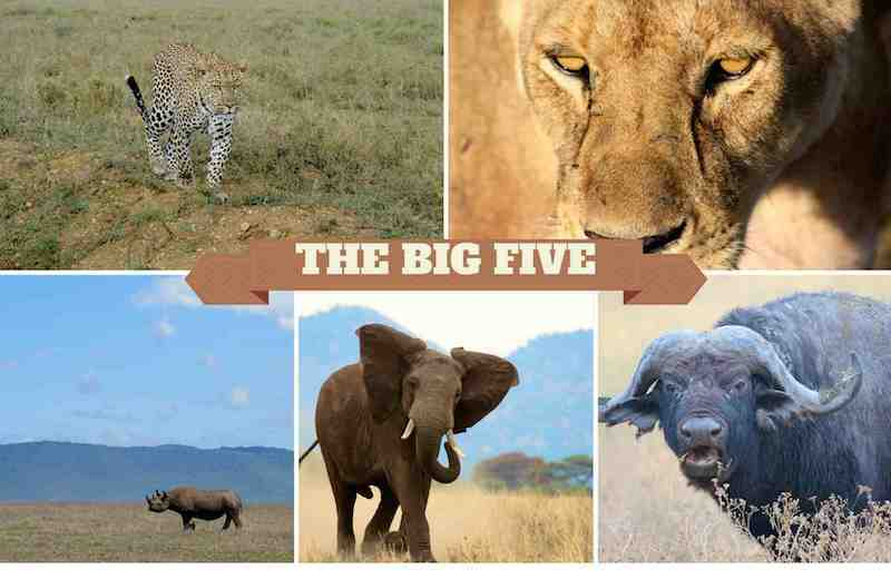 The Faces Behind Africa's Big Five