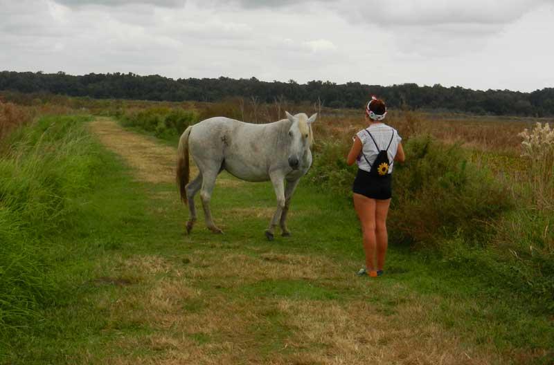 Paynes Prairie wild horse Paynes Prairie: Bison and wild horses? Yup, in Florida
