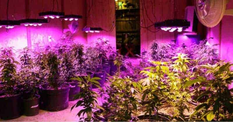 HOW MANY LED WATTS ARE REQUIRED PER SQUARE FOOT OF GROW SPACE