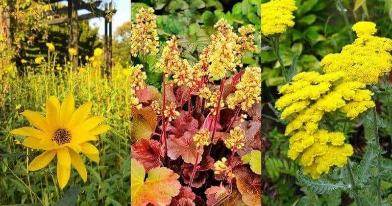 34 Amazing Yellow Perennial Flower Varieties For Your Garden