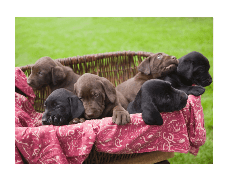 Dog Neutering Aftercare Tips