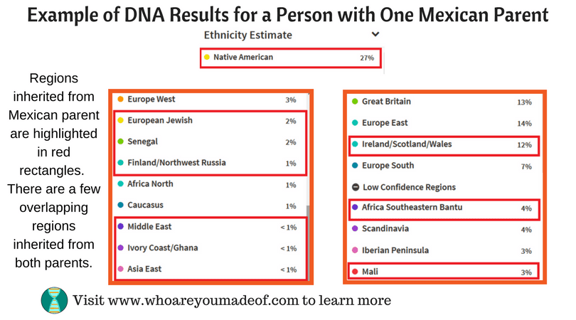 Example of DNA Results for a Person with One Mexican Parent