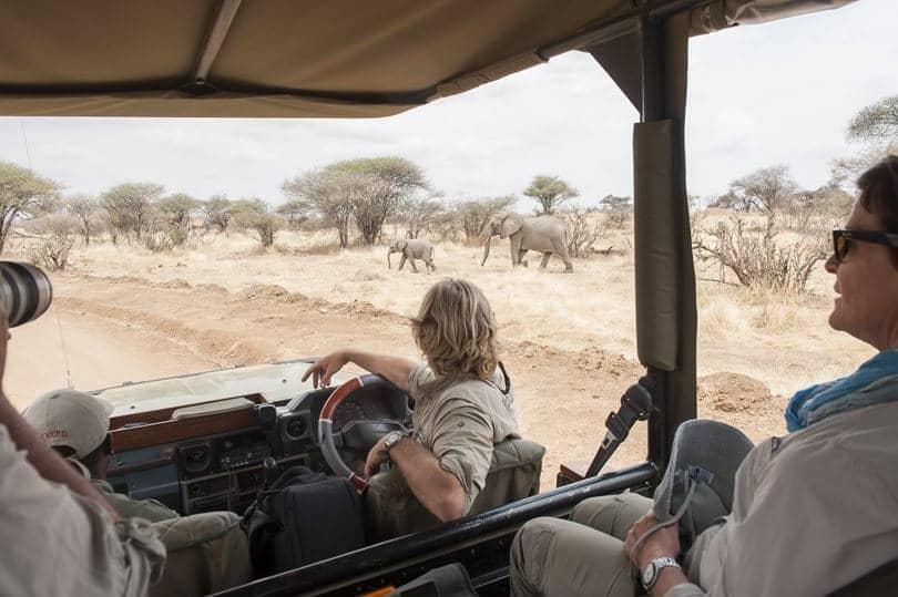 Kwihala Camp safari