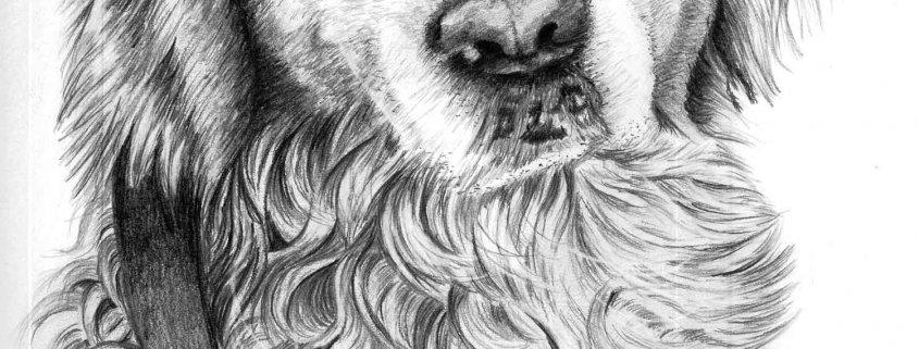 Dog Portrait in Pencil